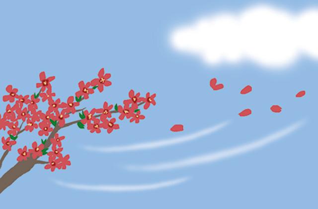 꽃잎날리는.jpg